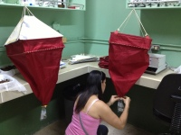 Flor sets up the Berlese Funnels for arthropod extraction.