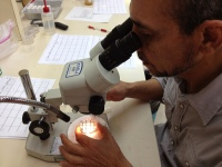 Alex reads arthropod samples.